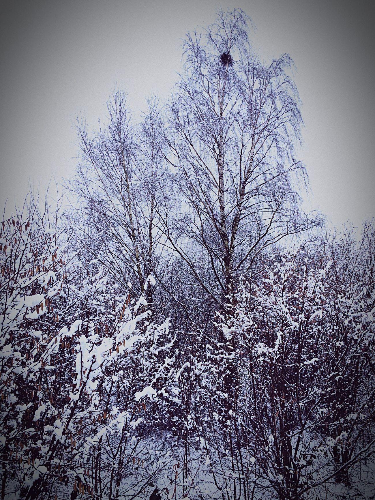 Schnee Wartezeit