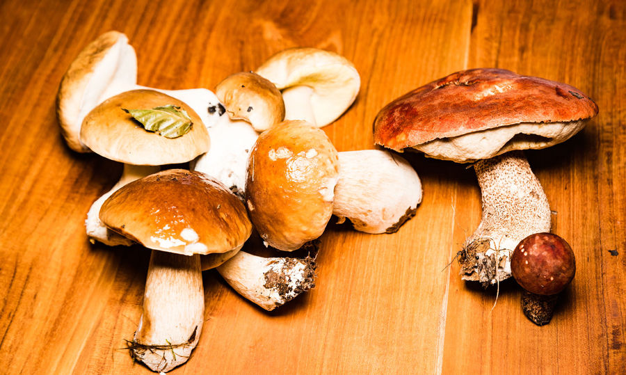 porcini, orange bolete, boletus edulis, leccinum aurantiacum Close-up Day Food Food And Drink Freshness Fungus Healthy Eating High Angle View Indoors  Mushroom No People Ready-to-eat Rotkappe Steinpilz