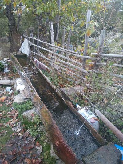 yayladan Çeşme Pınar Doğa Temizhava Su Yayla Havası Kütahya Türkiye Turkey Day Outdoors Water Tree No People Nature
