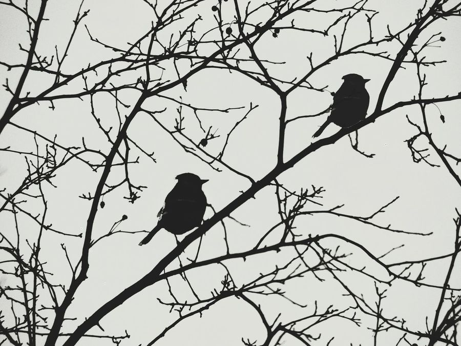 Two Is Better Than One Birds Birds And Branches Pair Sillouette