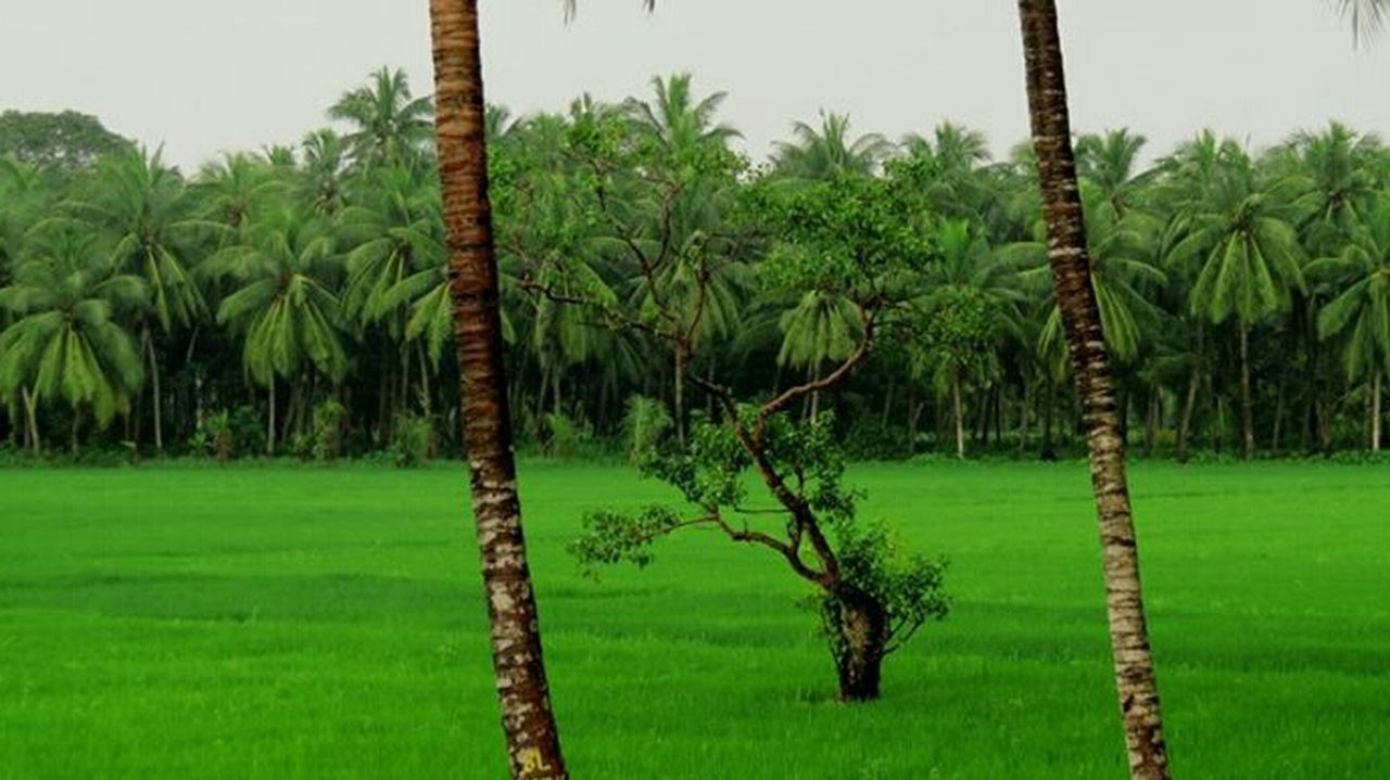Green Color Landscape Grass Agriculture Nature Beauty In Nature Trees Awesome_view Tree No People Flowers,Plants & Garden