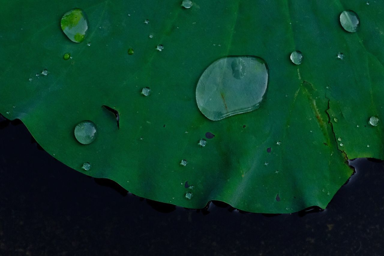 leaf, green color, drop, close-up, water, nature, growth, wet, no people, outdoors, beauty in nature, day, floating on water, full frame, fragility, backgrounds, lily pad, freshness
