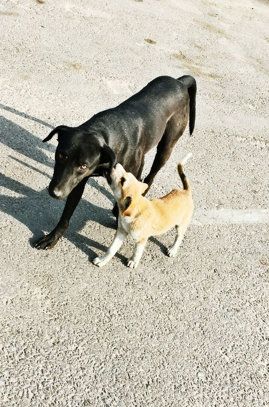 Animal Themes Mammal Dog Domestic Animals Shadow High Angle View Outdoors 🇮🇳 India Roadside Shots Streetdogs Love Has No Labels Childhood