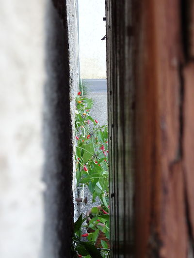 Architecture Brown, Brown Door, Brown Wooden Door Building Exterior Built Structure Day Flower Focus On Foreground Growing Hanging Multi Colored Nature No People Plant Plants, Chilli Plants Red, Yellow And Green Selective Focus Sky Town Wall - Building Feature Wall, White Wa Wooden Door, Door,