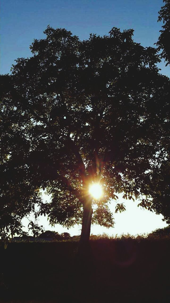 tree, sun, sunbeam, sunlight, lens flare, silhouette, nature, tranquility, tranquil scene, beauty in nature, shining, no people, sunset, growth, outdoors, low angle view, sky, scenics, day