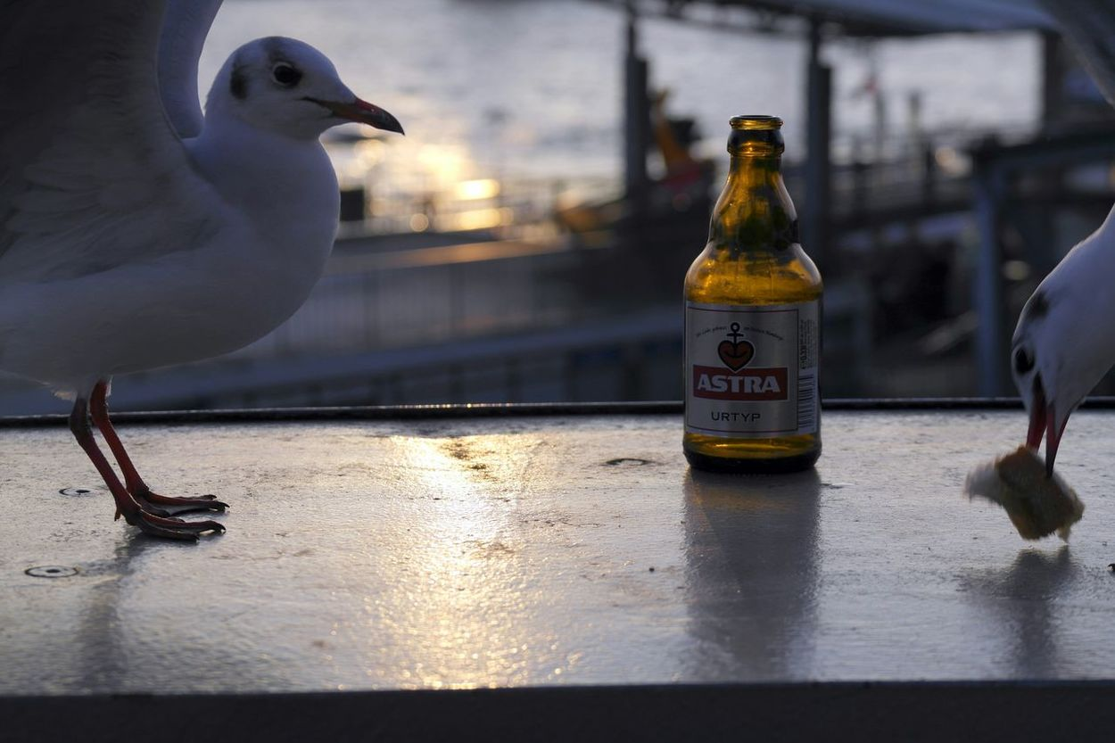Hamburg Seagulls is this Foodporn or feedingporn? ?? Bread Beer Bier Beer Porn Beerporn EyeEm Best Snapshots  Check This Out