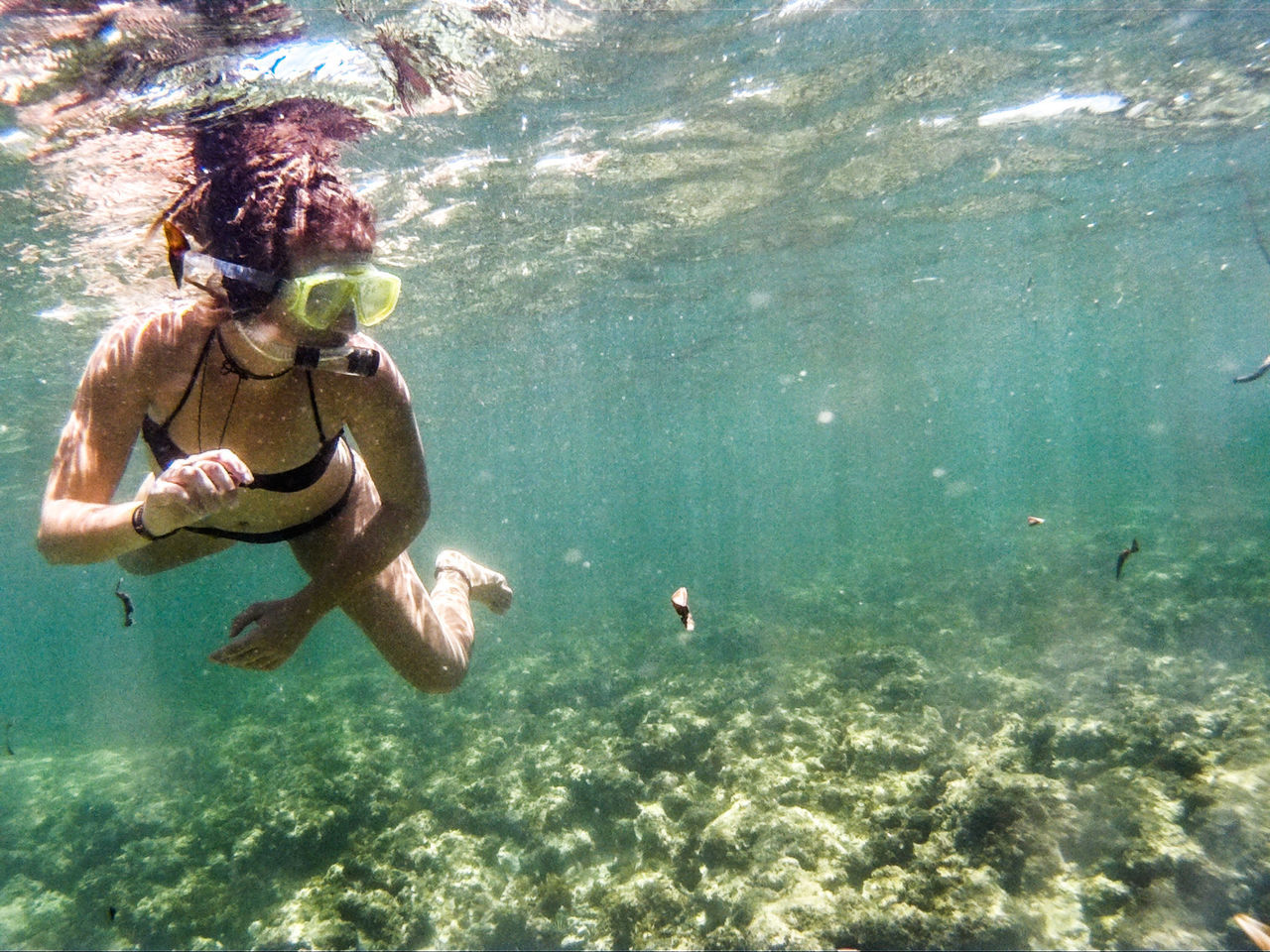 underwater, swimming, water, undersea, sea, leisure activity, real people, animal themes, scuba diving, one person, shirtless, snorkeling, full length, day, sea life, nature, adventure, vacations, lifestyles, young adult, outdoors, people