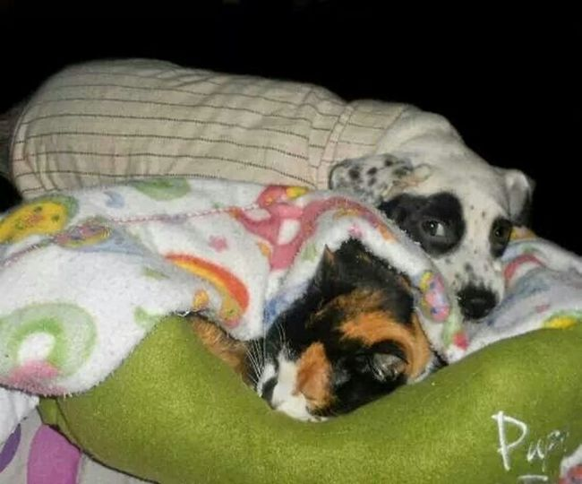 Better Together Catanddog Friendship ❤ Furkids