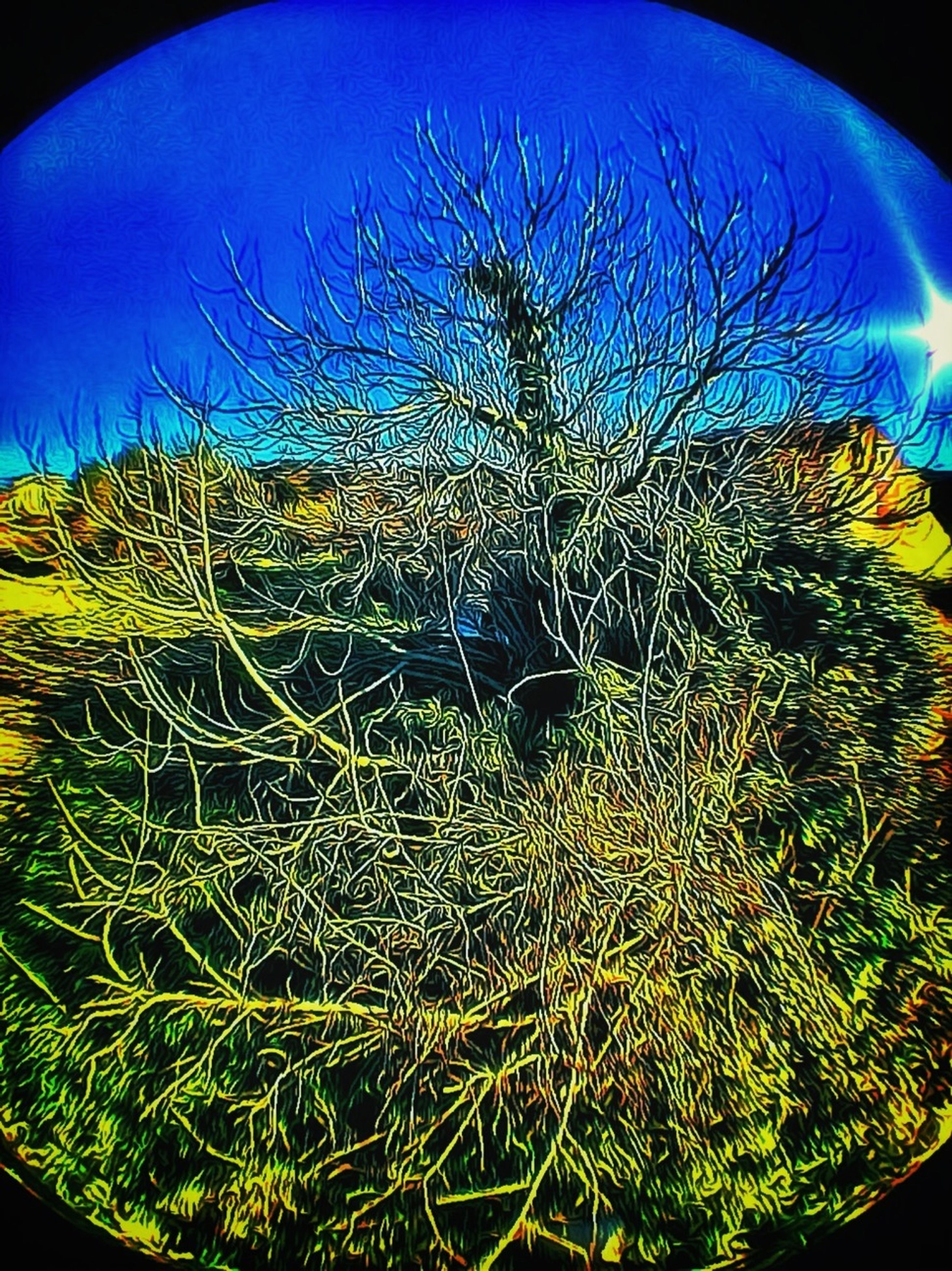 bare tree, blue, auto post production filter, night, low angle view, sky, nature, beauty in nature, clear sky, branch, tranquility, close-up, tree, transfer print, outdoors, field, no people, scenics, growth, tranquil scene