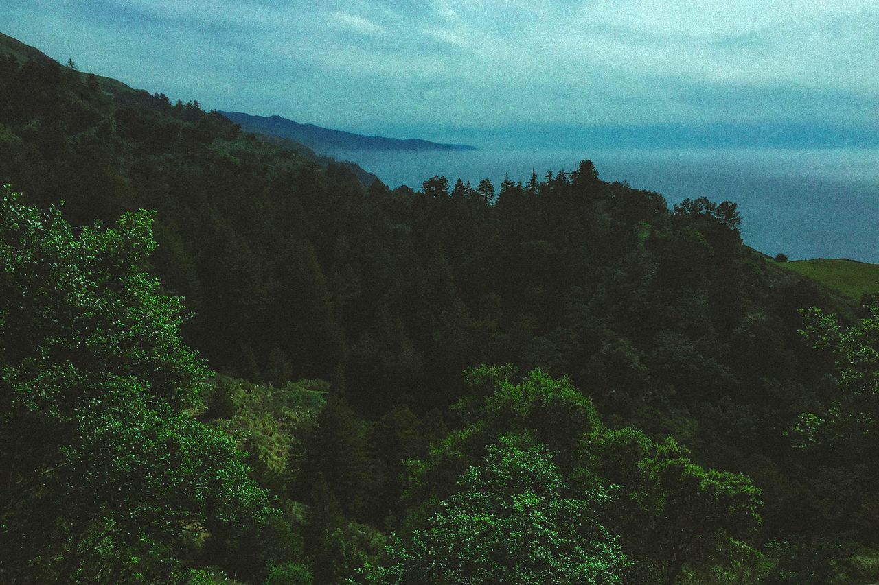 tree, nature, sky, beauty in nature, tranquility, mountain, scenics, tranquil scene, growth, no people, outdoors, landscape, forest, day, water