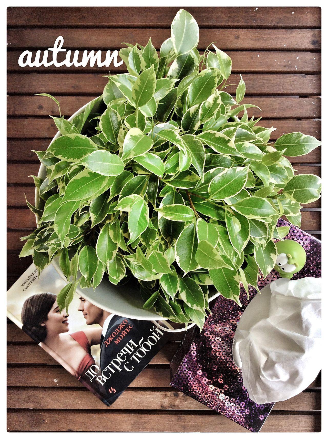 Autumn Flower Book Papers до встречи с тобой Me Before You