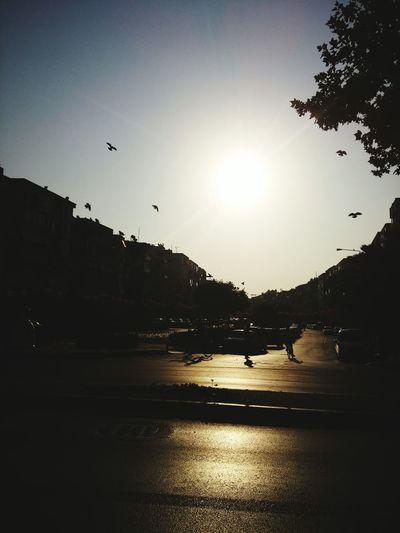 Morning Sun Happy