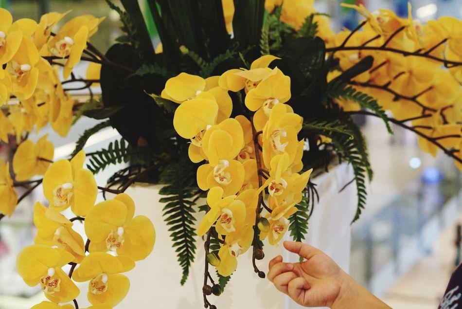 Something Yellow Beautiful Floral Fresh Yellow Yellow Flowers