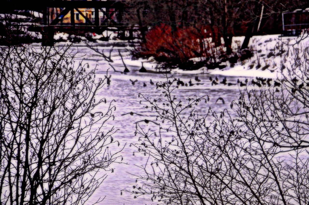 winter, tree, snow, nature, cold temperature, bare tree, branch, no people, beauty in nature, outdoors, day, bleak, sky