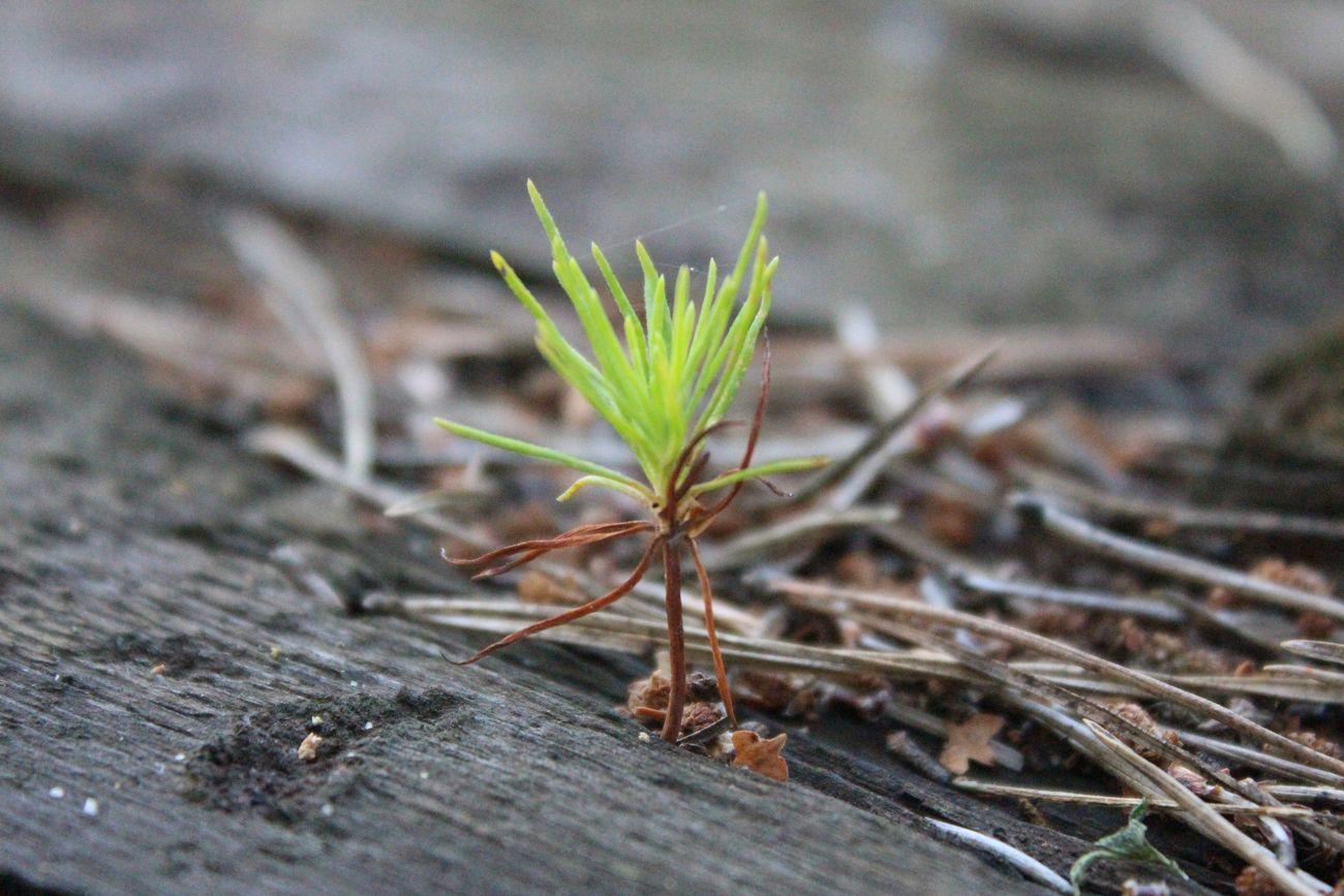 The Future Of The Tree Plant Wood Nature Hope будущее дерево растение древесина Природа надежда Life Жизнь EyeEm Best Shots - Nature Macro Macro Nature макро