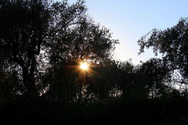 Alberi Beauty In Nature Calabria (Italy) Cielo Azzurro Cosenza Nature No People Outdoors Raggi Solari Scenics Serra D'Aiello Silhouettes Sky Sun Sunset Tramonto Tranquility Tree