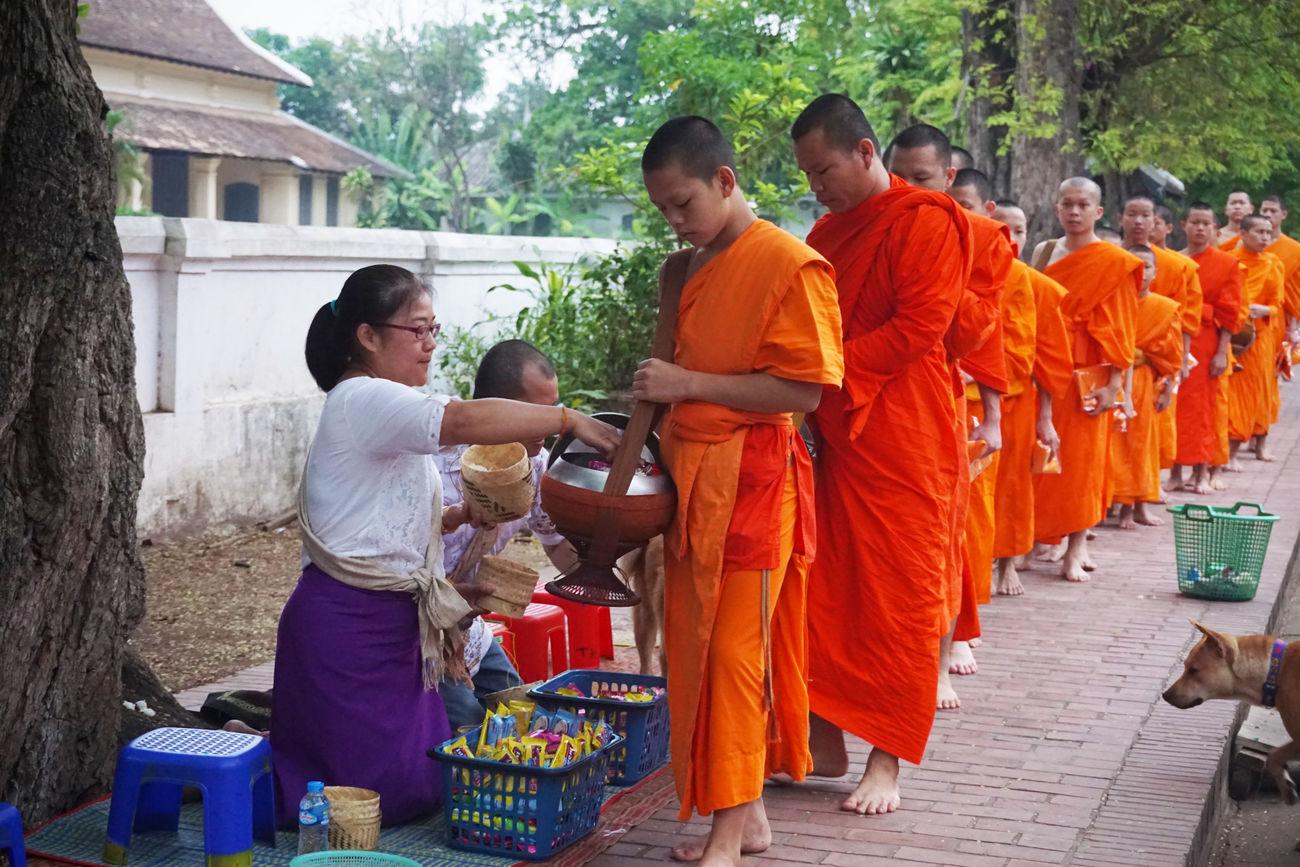 2017 Day Group Of People Laos Luang Phabang Luangprabang Men Morning Orange Outdoors Paindapatika People Real People Sanskrit Street World Heritage ラオス ルアンパバーン 御坊さん 托鉢 Monk  Temple Buddha Religion