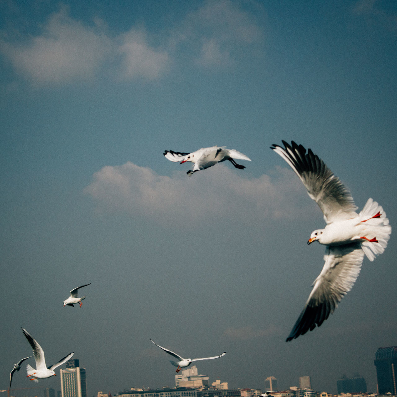 Beautiful stock photos of istanbul, Animal Themes, Animals In The Wild, Architecture, Bird