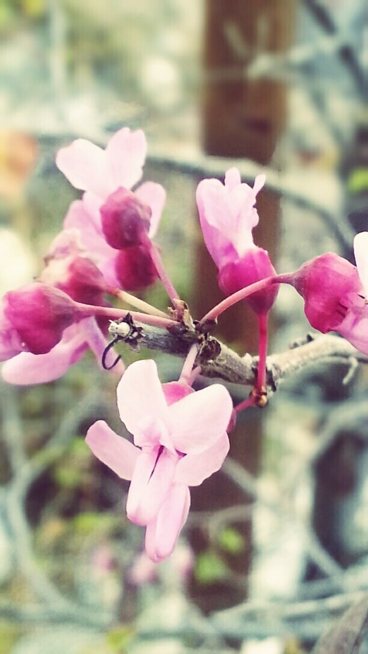 flower, nature, growth, pink color, beauty in nature, fragility, petal, blossom, tree, plant, no people, blooming, freshness, close-up, outdoors, day, flower head