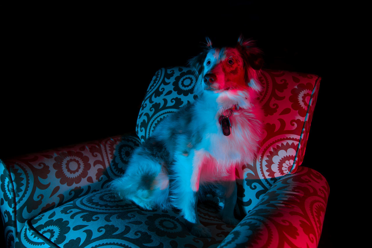 Armchair in outer space... Black Background One Person Parallel Universe No People Indoors  Perspective Mammal Pets Dog Animal Themes Domestic Animals Dogs Photography Chair Red Blue