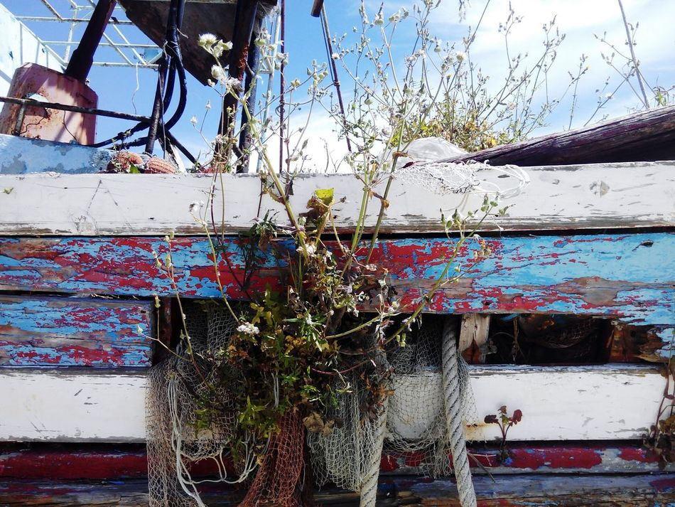 Ship Old Ship Ship Wreck Old Ship Wreck Vintage Ship Boats In A Line Boats And Sky Boats In The Sea Ship Iveco Italian Truck Beauty In Nature Ships Ships⚓️⛵️🚢 Vintage Ships Boat Old Shipyard Old Ship Old Ships Ship Wreck In Water Ship Wrech Ship Wreck Rusty Ship Wetland Ship At Dock Ship Wrecked Ship Wrecks Ship Wrecking Yard Shipping