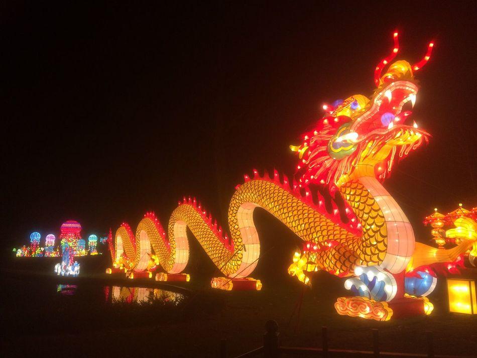 Night Illuminated Tradition Outdoors Chinalights zooantwerpen