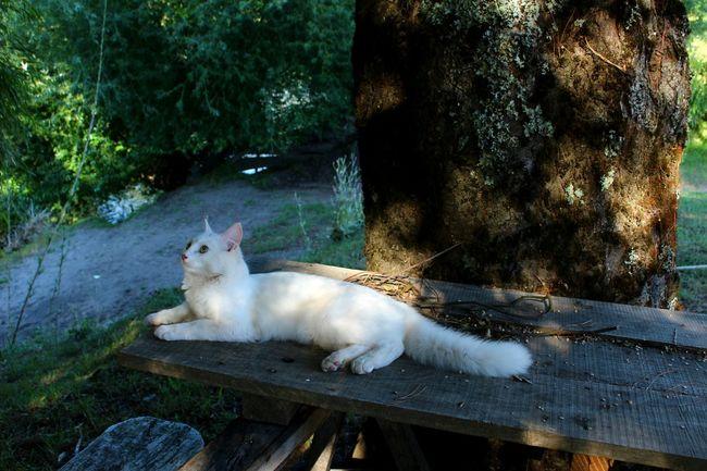 Mm un pajarito!! Alert Cat Miniña