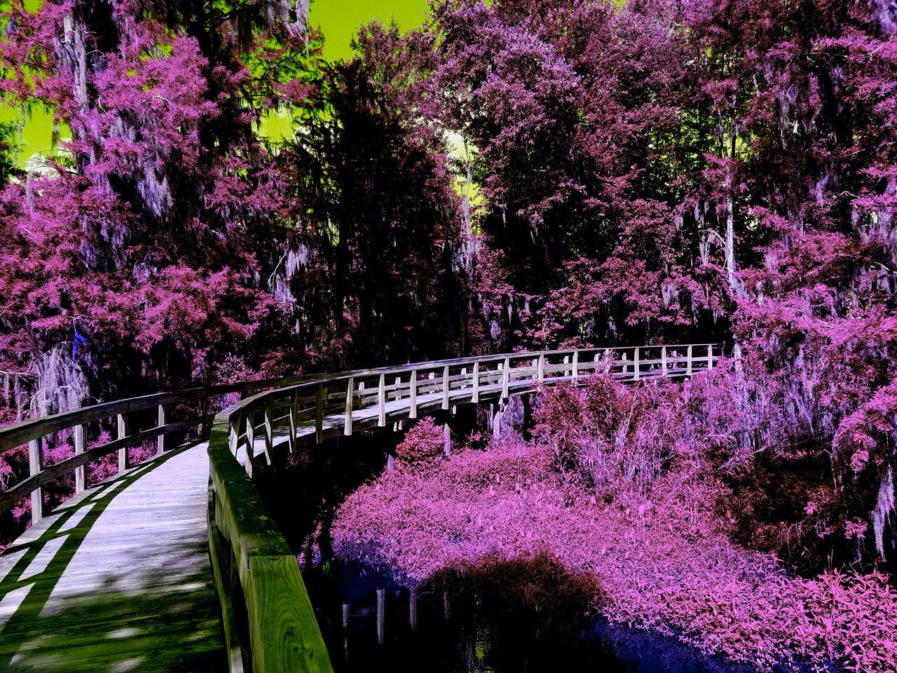 Phinizy Swamp First Eyeem Photo Filtered Nature Swamp Trees And Sky Trees Psychedelic Bridge Walkway