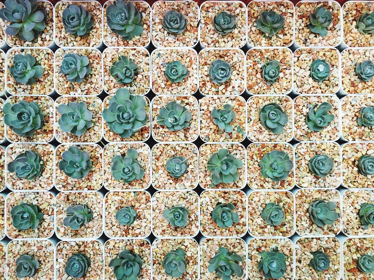 Baby Cactus addict!!! Floortraits Cactus Cactus Flower