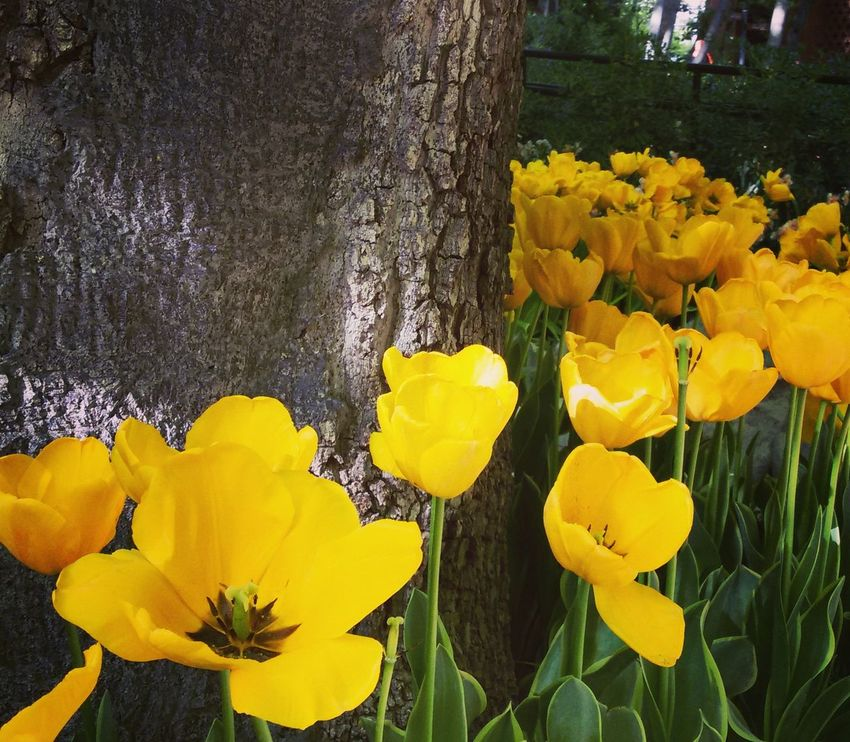 Relaxing Hello World Iranian Garden Spring Samsung Galaxy Camera Tehran, Iran Enjoying Life Flowers Yellow 2016 EyeEm Awards