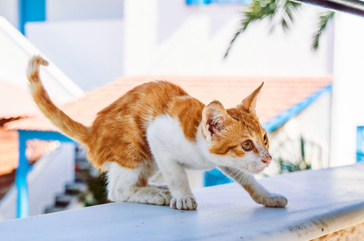 Beautiful stock photos of baby katzen,  Animals Attacking,  Architecture,  Brown,  Building Exterior