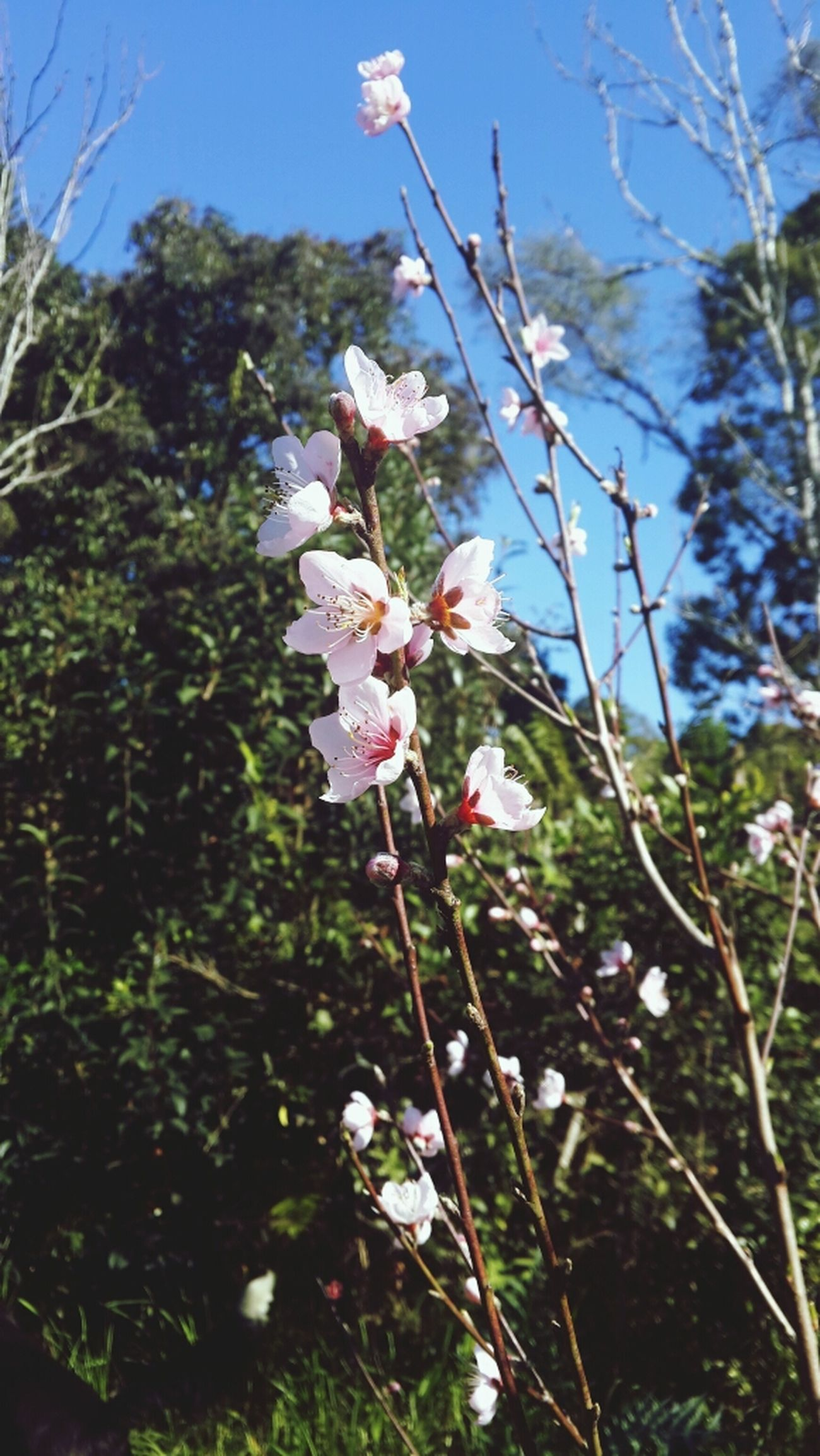 EyeEm Flower Pêssego