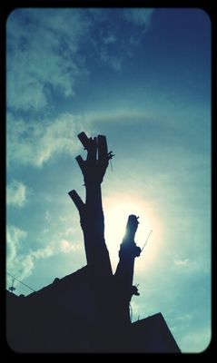 tree silhouette by 4 art is worship