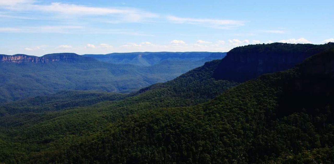 Nofilters Taking Photos Bluemountains Rainforest Bluefog Australia Naturephotography Travel Photography Relaxing Love ♥