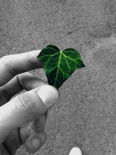 Check This Out! Green Leaf Color Splash
