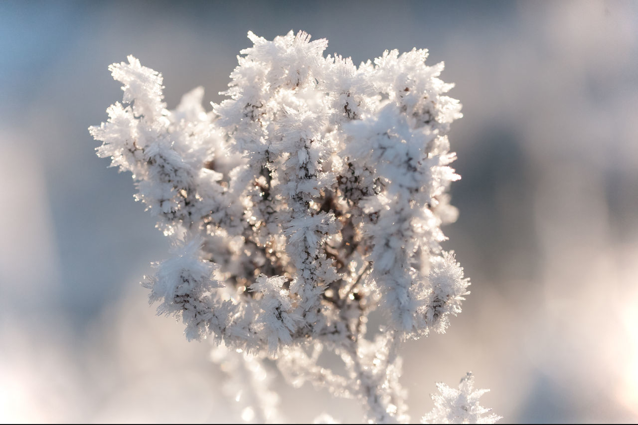 🌱❄️ Blizzard Bokeh Close-up Cold Cold Temperature EyeEm Best Edits EyeEm Best Shots - Nature EyeEm Nature Lover Fragility I LOVE PHOTOGRAPHY Ice Light And Shadow Nature Plant Plants And Flowers Silence Simple Quiet Love Snow Snow ❄ Snowflake Sunlight Winter Winter Winter Wonderland Wintertime