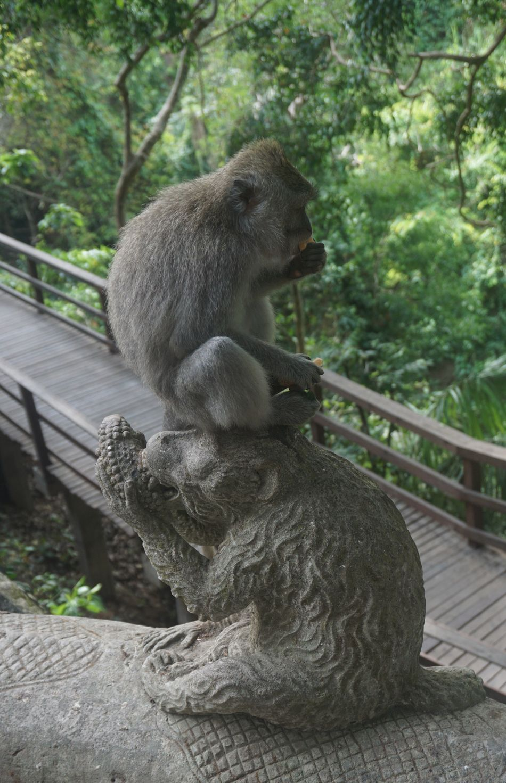 Animal Themes Animal Wildlife Animals In The Wild Baboon Bali Bali, Indonesia Day Food Full Length INDONESIA Mammal Maqaque Monkey Monkeys Nature No People One Animal Outdoors Rainforest Sitting Tree Ubud Ubud, Bali
