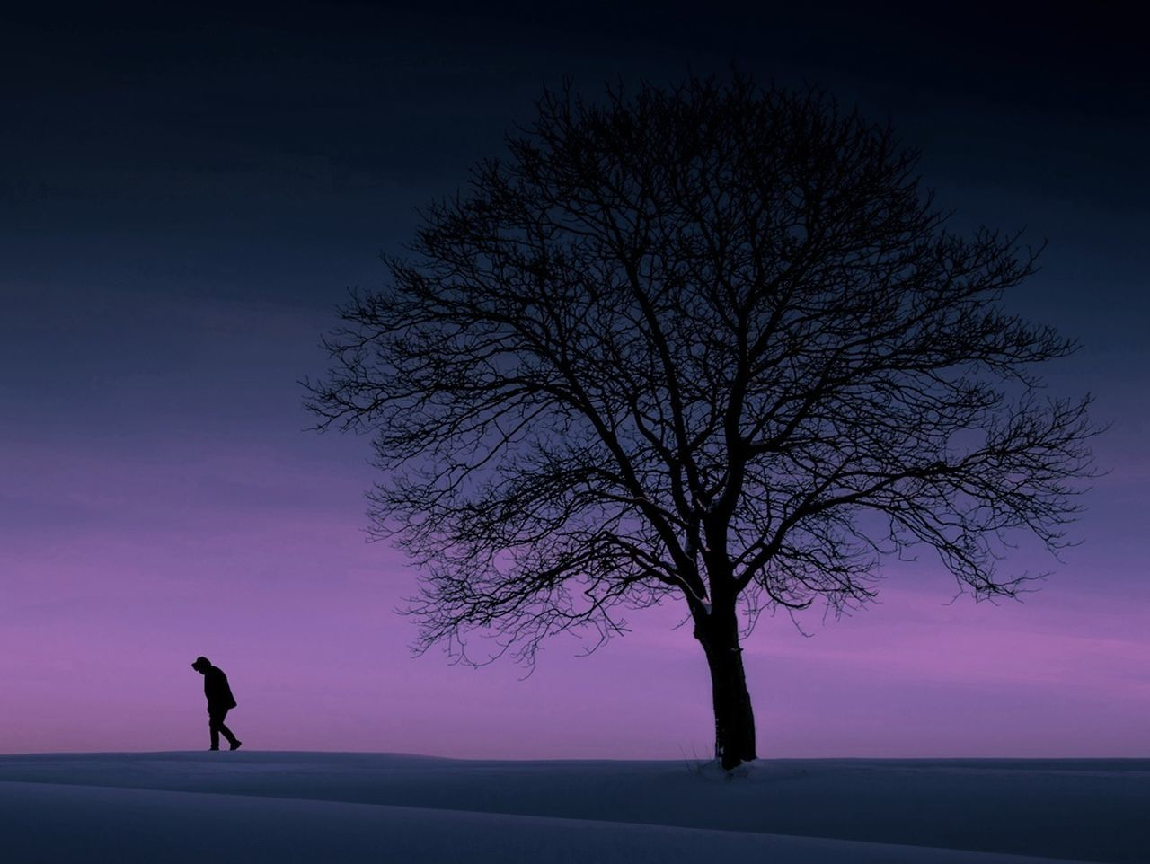 Silhouette Tree One Person One Man Only Adults Only Full Length Only Men People Beauty In Nature Men Winter Landscape Night Adult Sunset Nature Adventure Outdoors Sky Sportsman Silhouette Tree Winther Snow Purple Minimalisme