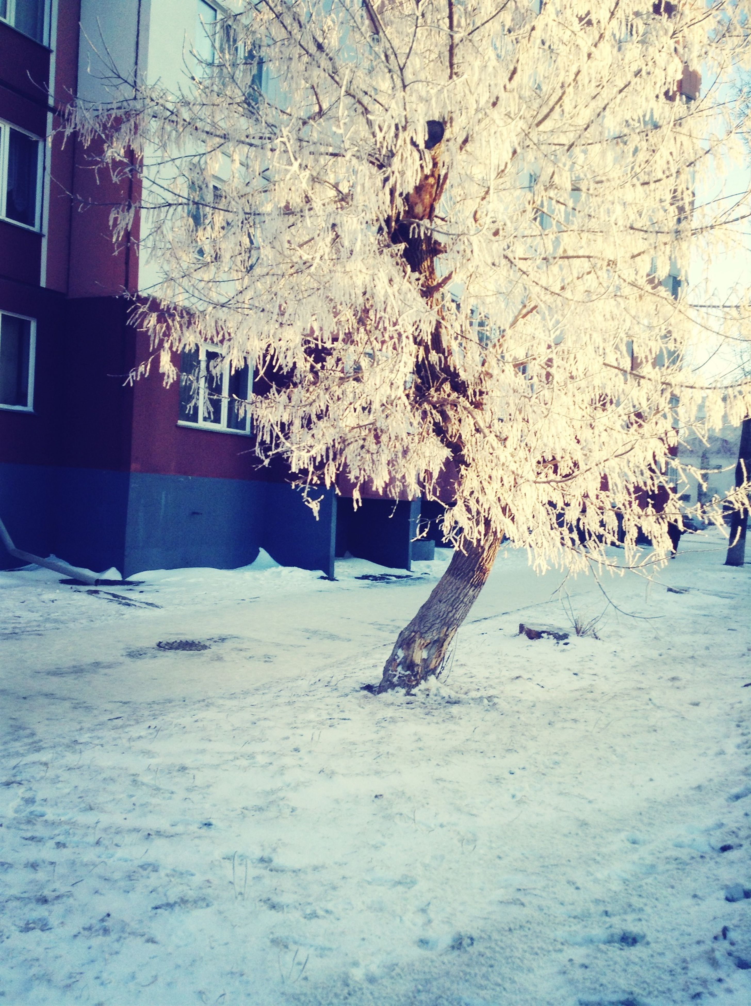 snow, tree, winter, cold temperature, built structure, building exterior, architecture, season, bare tree, sunlight, branch, house, day, nature, tree trunk, covering, outdoors, white color, weather, shadow