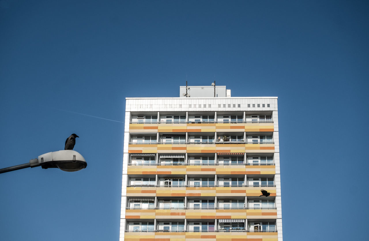 Birdwatching Animal Themes Architectural Detail Architectural Feature Architecture Berlin Berlin Photography Berliner Ansichten Birds Building Exterior Building Story Buildings & Sky Built Structure City Cityexplorer Clear Sky Day Low Angle View No People Sky Urban Landscape Urbanphotography
