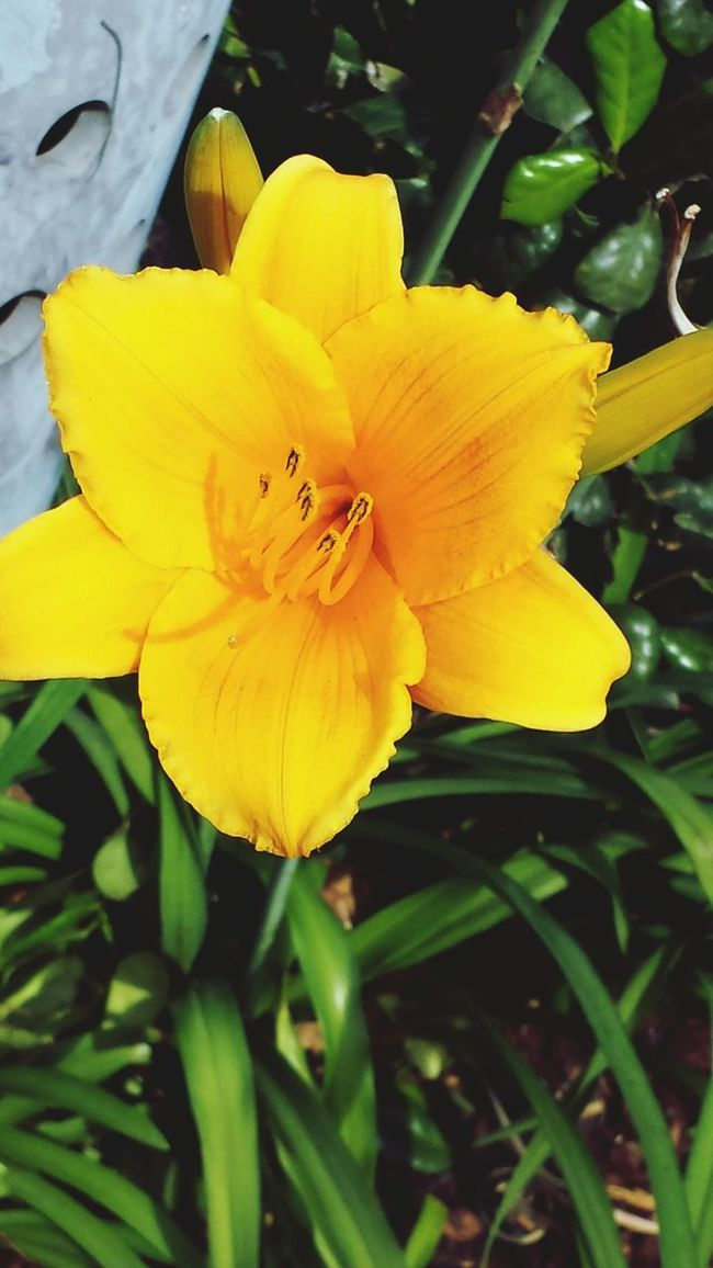 Flowerporn , Earlymorning Blossom