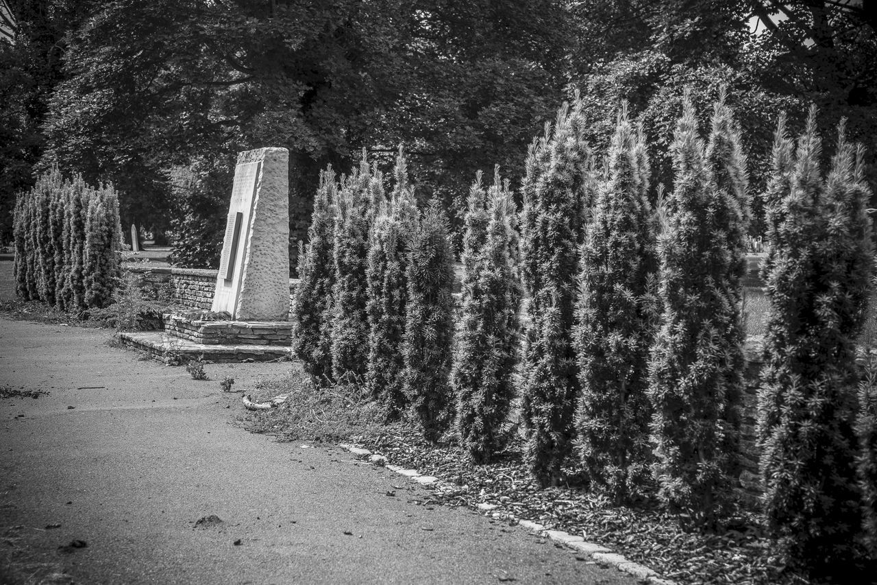 Civilian War Memorial Kingston Cemetery Fratton Portsmouth. B&w B&w Photography Civilian War Memorial Day Fratton Growth Kingston Cemetery Lestweforget Nature No People Outdoors Plant Poppies  Portsmouth Remember Rememberance Remembering Tranquil Scene Tranquility Tree We Will Remember Them World War 2 World War 2 Memorial WWII WWII Memorial