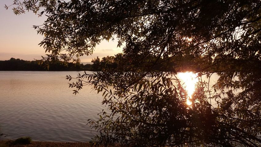 Tree Water Branch Sunset Tranquil Scene Scenics Tranquility Sunlight Growth Sun Beauty In Nature Sunbeam Nature Silhouette Reflection Plant Calm Sky Growing River Sunset