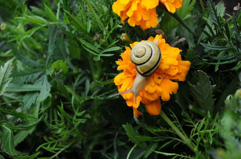 Flower Snail Outdoors Yellow Yellow Flower Beauty In Nature Striped Snail Orange Green