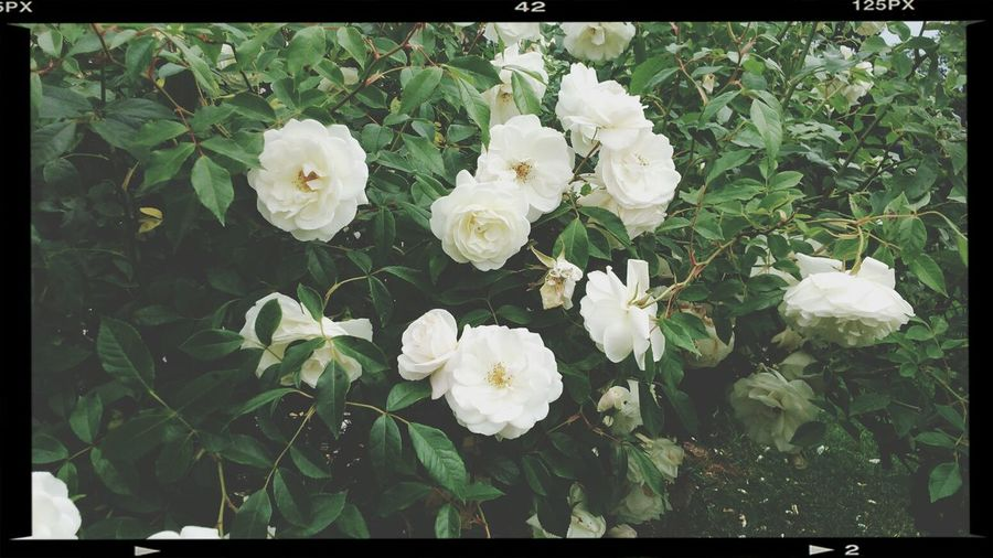 Flowers And Roses Nature Love ♥