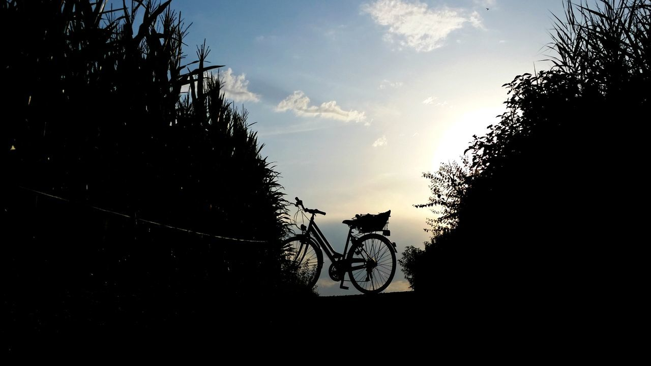 bicycle, transportation, tree, riding, sky, silhouette, mode of transport, sunset, land vehicle, cycling, cloud - sky, outdoors, nature, road, day, men, one person, people