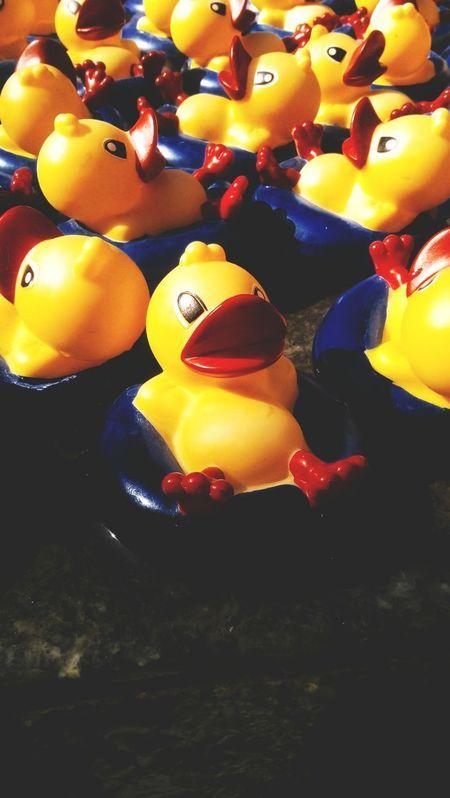 Patitos tomando el sol. Close-up Day Mexico CDMX. Fotography Fotografia No People City Sunlight Ducks At The Lake Plastic Duck Patitos Hule Duck Plaza Illuminated