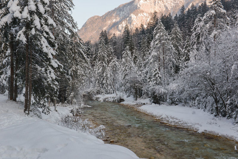 Beauty In Nature Christmas Cold Cold Days Cold Temperature Cold Weather December Ice Ice Age Icy January Nature New Year River Snow Snow Covered Snow Covered Landscape Snow Covered Trees Snowing Winter Winter Winter Trees Winter Wonderland Wintertime Winterwonderland