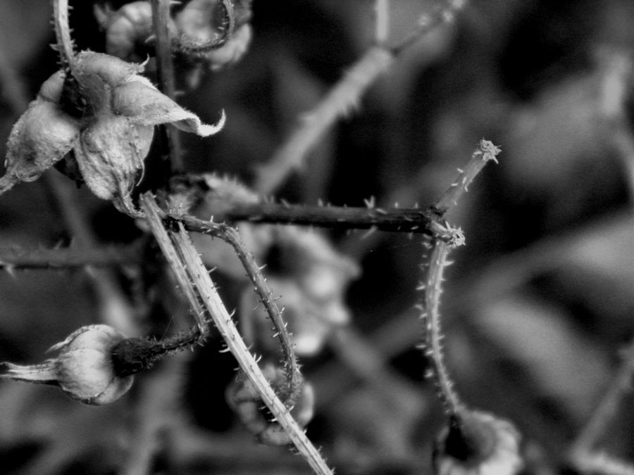 Beauty In Nature Black And White Black And White Photography Bokeh Bokeh Photography Close-up Day Focus On Foreground Fragility Growth Macro Macro Photography Nature No People Outdoors Plant Tree Summer Ending Autumn