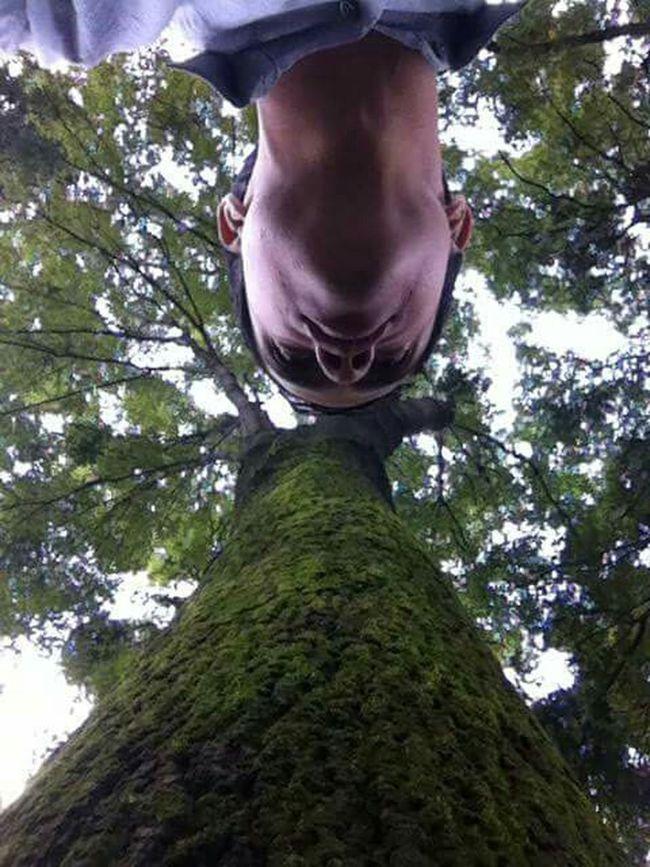 Mirada al interior Hugging A Tree El Arbol De La Vida Arboles , Naturaleza Mi Arbol Favorito Arboles En Primavera Mirada  Mirando Mira La Naturaleza Capturing Freedom